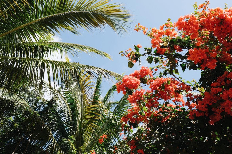 Naturaleza en Miami